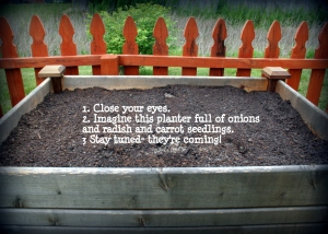 raised bed for carrots and onions