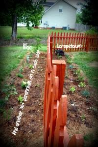 Border garden #2