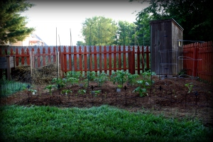 vegetable garden mid-May