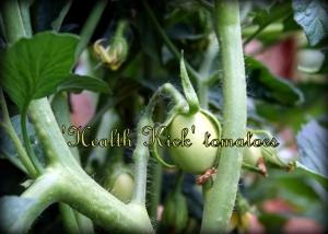 Health Kick tomato