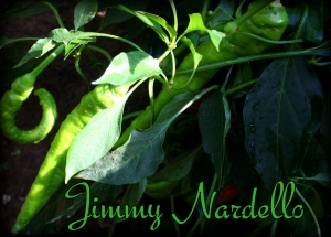 Jimmy Nardello pepper